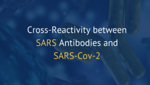 Cross-Reactivity between SARS and SARS-CoV-2